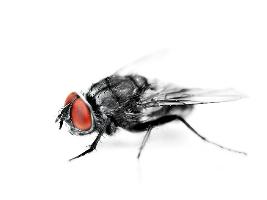 Fliegen